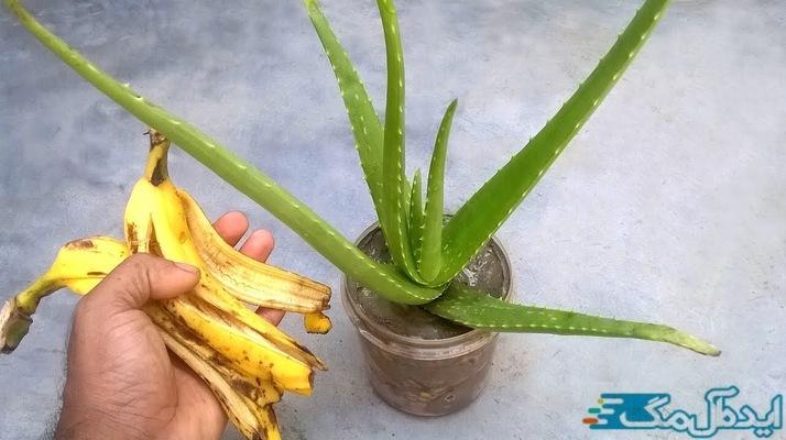 معرفی کود های طبیعی مانند پوست موز برای بهبود رشد گیاهان خانگی