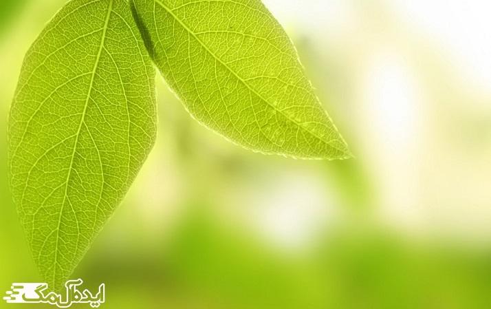 صفات مثبت و منفی سبز