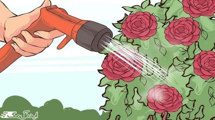 برسی کامل نحوه نگهداری از گل کاملیا