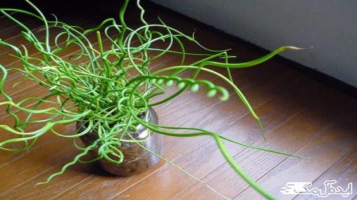معرفی جدیدترین گیاهان آپارتمانی