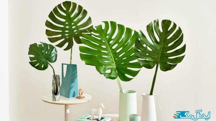 معرفی و برسی کامل گیاهان مقاوم برای آپارتمان ها