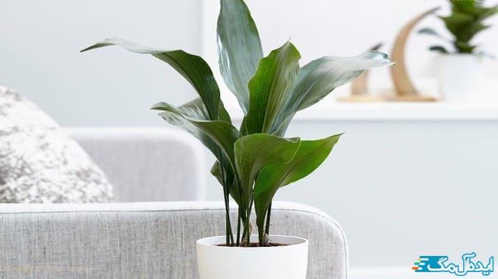معرفی کامل گیاهان مقاوم به کم نوری و نحوه نگهداری از آنها