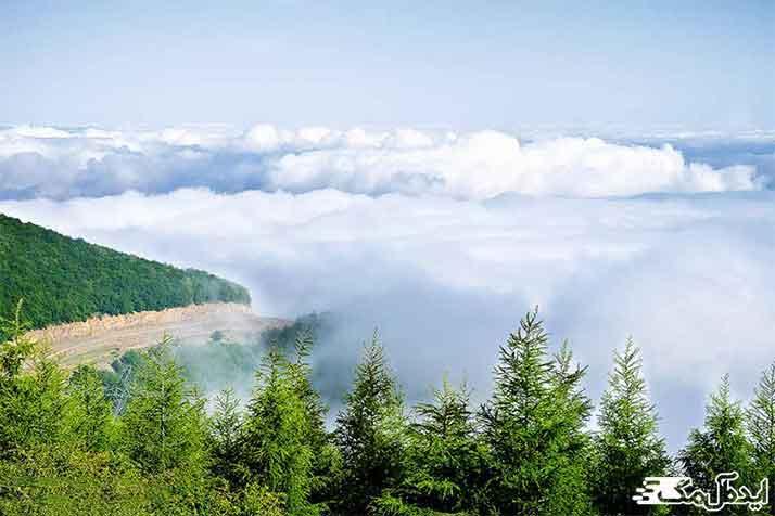 جنگل ابر شاهرود از جاهای دیدنی ایران
