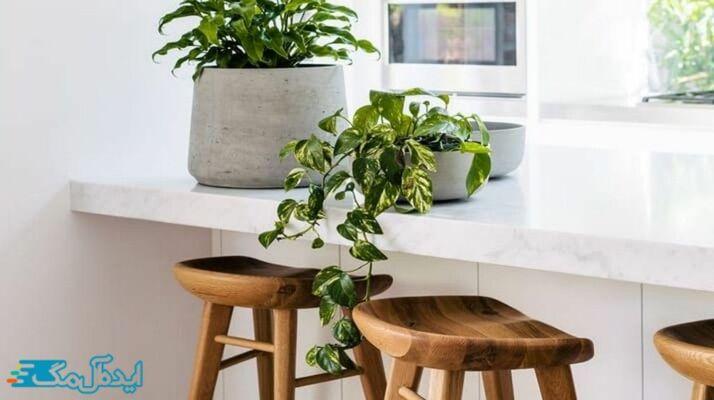 پتوس؛ یکی از بهترین گیاهان آپارتمانی
