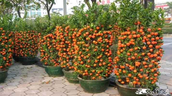 معرفی زیباترین گیاهان گلدار آپارتمانی