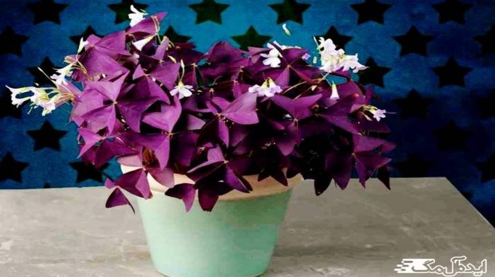 معرفی بهترین گیاهان گلدار برای آپارتمان با عکس