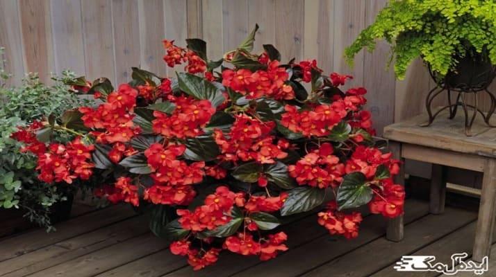 اسامی گیاهان گلدار مقاوم+عکس