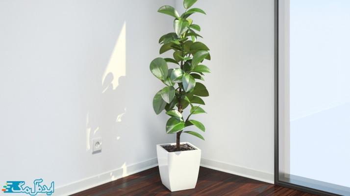 معرفی گیاهان آپارتمانی مقاوم+عکس