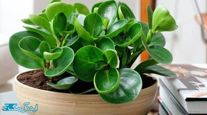 معرفی کامل گیاهان مقاوم به نور کم و نحوه نگهداری از آنها