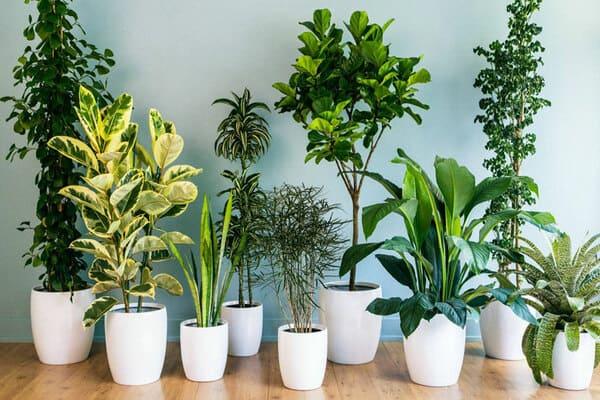 معرفی بهترین گیاهان مقاوم به نور کم برای آپارتمان
