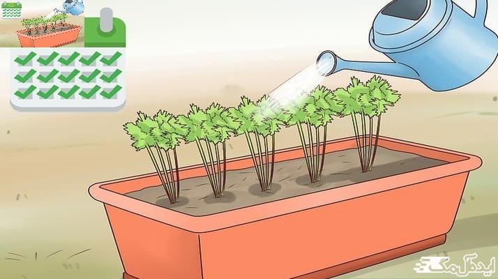 نگهداری از گیاهان آپاتمانی