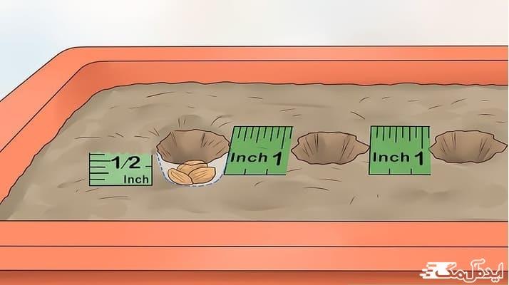 نحوه پرورش و نگهداری از هویج