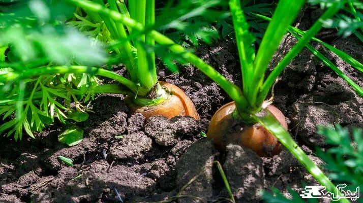 نگهداری از گیاهان خانگی