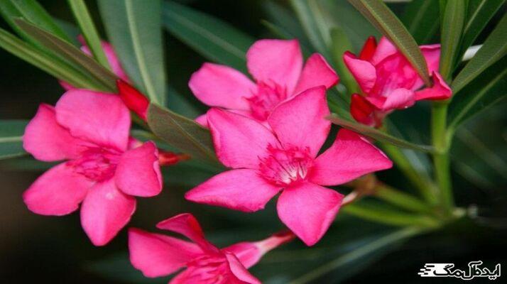 معرفی گیاهان سمی و نحوه نگهداری از آنها