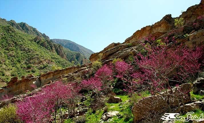 دره ارغوان طرقبه از جاذبه های گردشگری بینالود