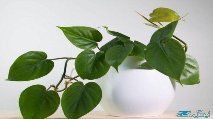 معرفی بهترین گیاهان آپارتمانی