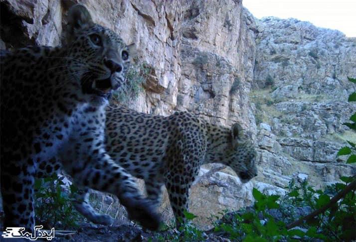 پارک ملی تندوره (چهلمیر)