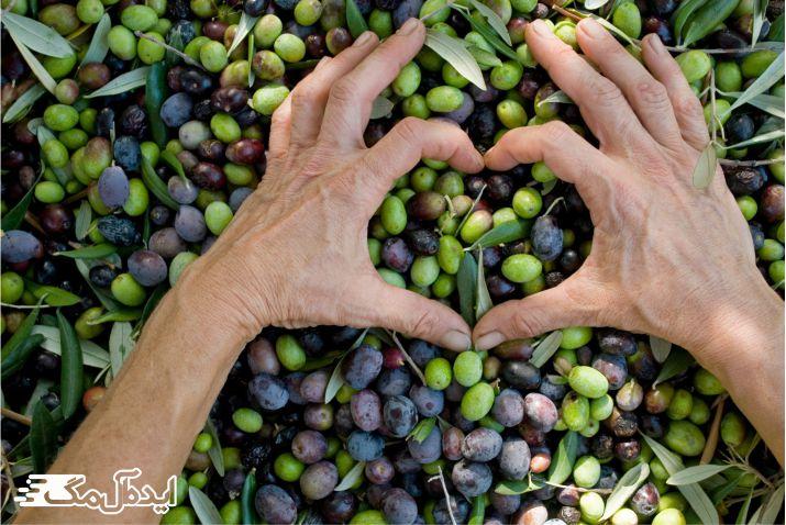 تاثیر برگ زیتون روی سلامت قلب