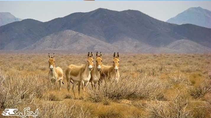 منطقه شکار ممنوع کمر سرخ از مناطق دیدنی سرایان