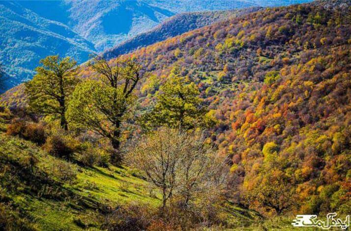 جنگل های هوراند