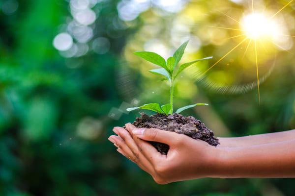 آموزش صفر تا صد کاشت نهال درخت