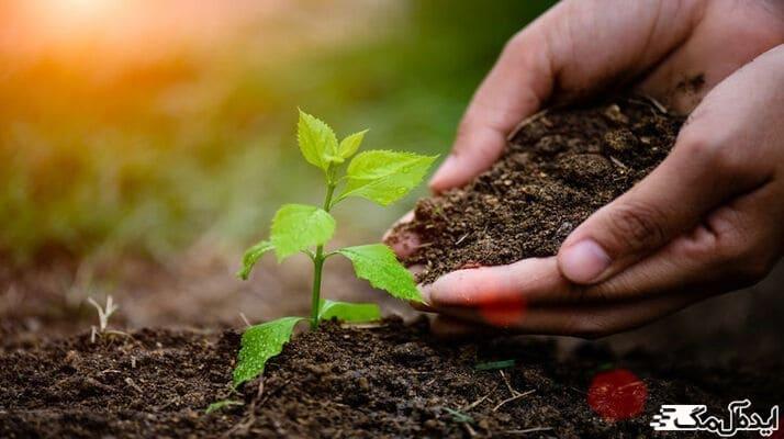 راه های کاشت نهال درختان میوه