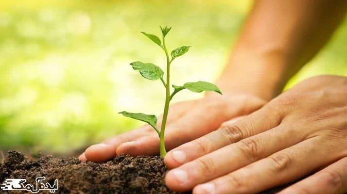 برسی عوامل موثر بر کاشت درختان