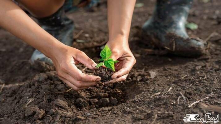 معرفی بهترین فصول برای کاشت درخت