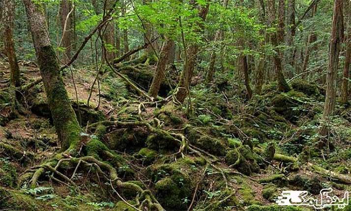 جنگل ترسناک در ژاپن