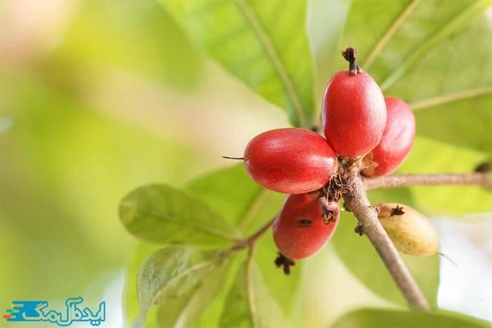 خوشمزه ترین میوه های جهان