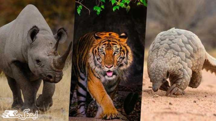 تحقیق درباره حیوانات وحشی برای دبستان و کودکان