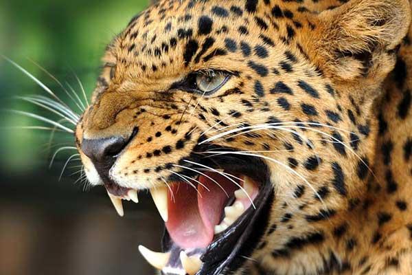 تحقیق درباره حیوانات وحشی برای دبستان