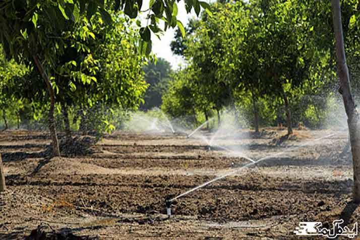 مقدار آب مورد نیاز درخت گردو در آبیاری بارانی