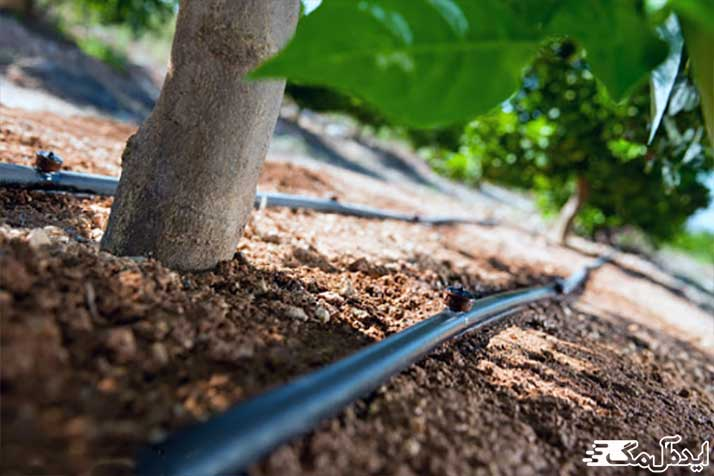 انواع روشهای آبیاری درخت گردو