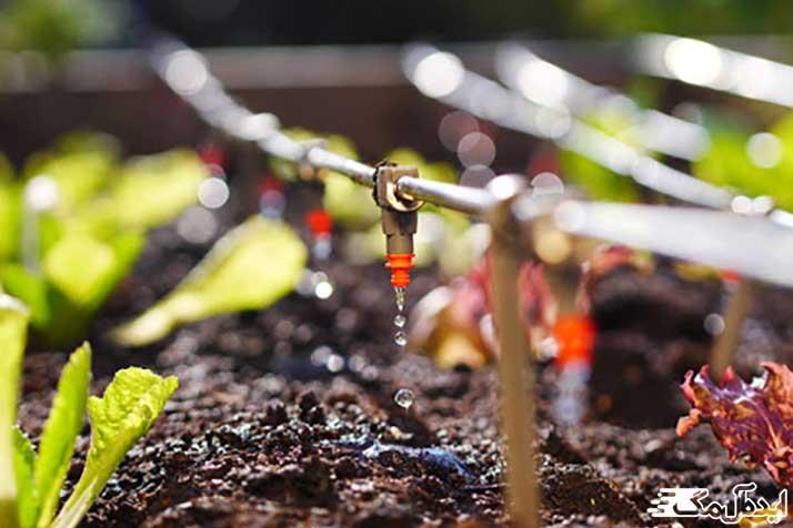 مقدار آب مورد نیاز درخت گردو در آبیاری قطره ای