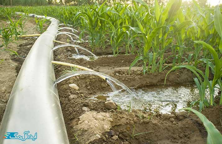مقدار آب مورد نیاز درخت در آبیاری قطره ای
