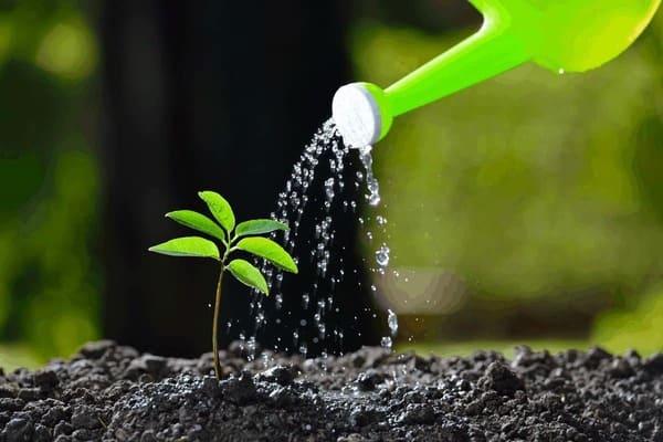 آموزش تعیین میزان آب مورد نیاز درخت