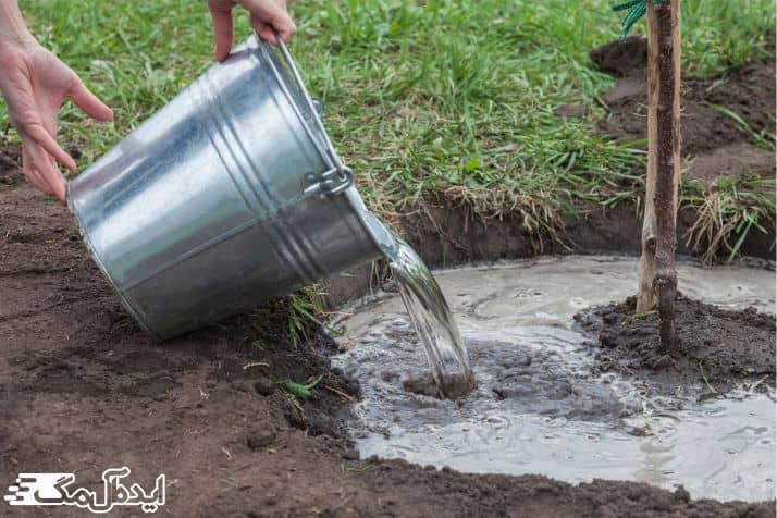 میرزان آب مورد نیاز درخت گیلاس در فصول مختلف