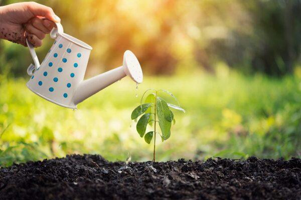 آموزش کامل آبیاری درختان مرکبات