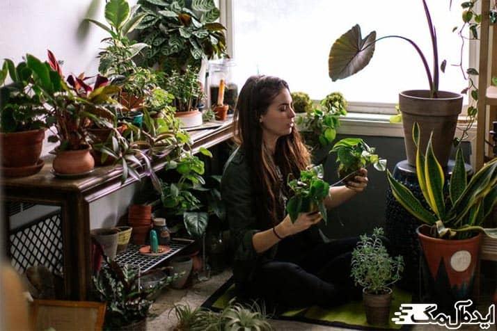 تاثیرات مثبت گیاهان آپارتمانی بر زندگی انسان