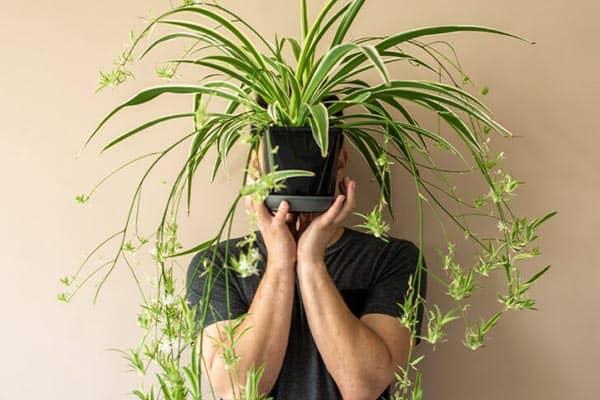 تاثیر گیاهان آپارتمانی بر روح و جسم