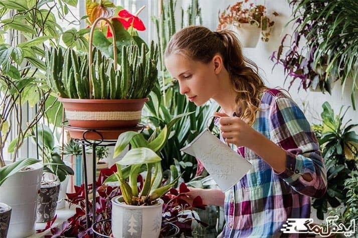 تاثیرات مثبت گیاهان آپارتمانی