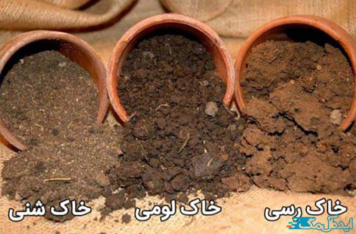 خاک نهال گردو