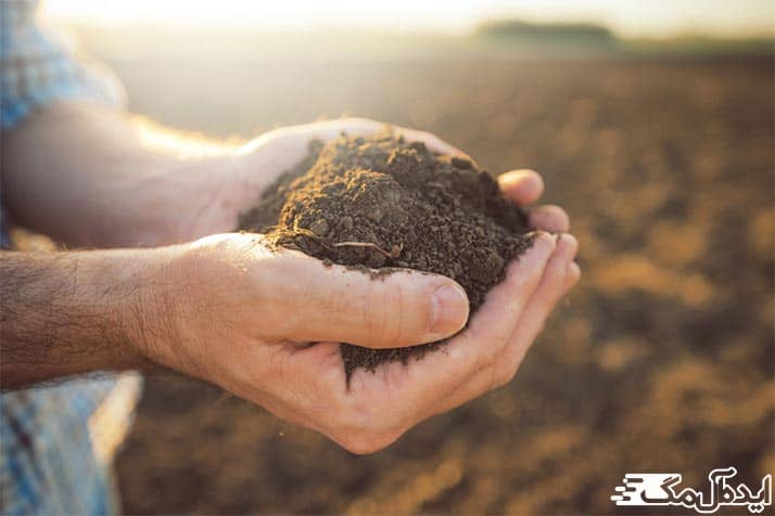 خاک مناسب نهال انگور
