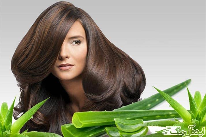 گیاهان دارویی مفید برای پوست و مو