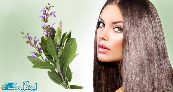 مزایای مصرف دمنوش مریم گلی برای مو
