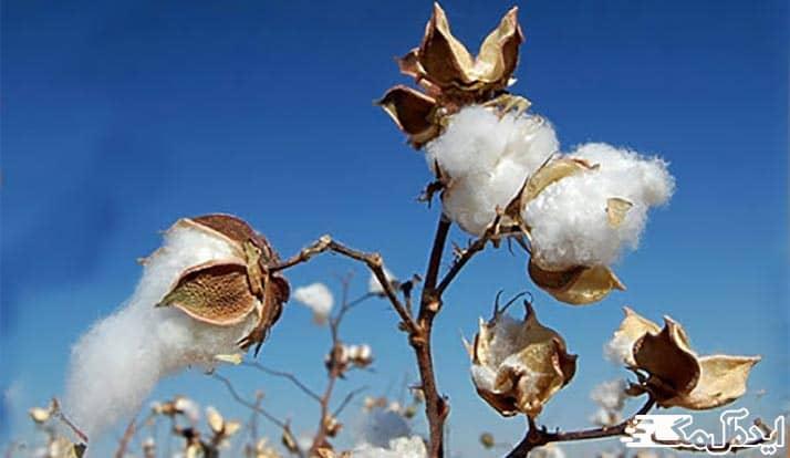 محصولات کشاورزی انبارآلوم