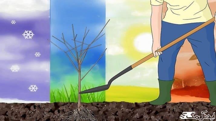 نحوه صحیح کاشت درختان میوه