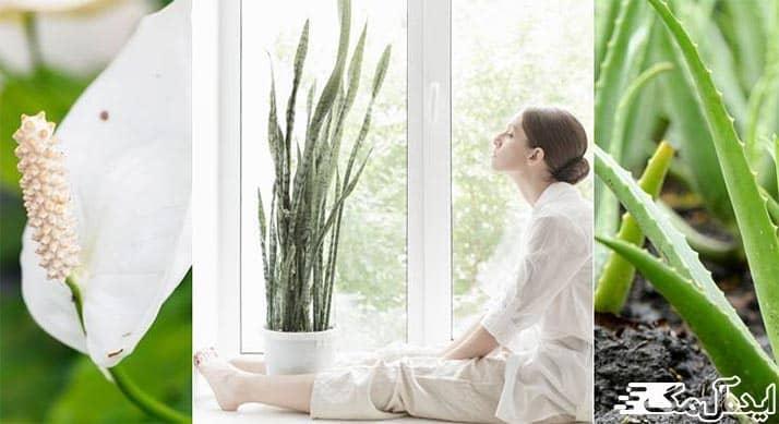 تصفیه هوا با گیاهان آپارتمانی