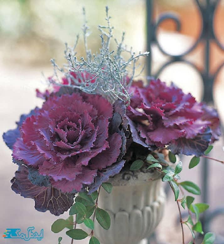 گلهای مناسب مناطق سردسیر